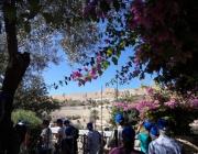 2-tag-garten-gethsemane