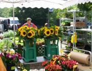 Sonnenblumen - und mehr