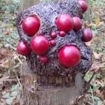Update: Geheimnisvolle Kunstwerke im Gierather Wald