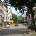 Werden die Bäume in der Fußgängerzone doch gefällt?