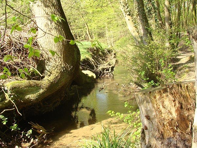 Landesbetrieb erklärt Baumfällungen an L288