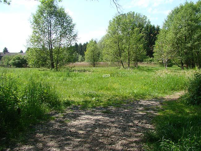 Mutzbach (4): Der kleine Sumpf