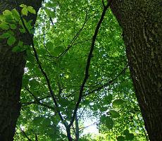 Mutzbach (7): Das letzte Stück bis Dünnwald