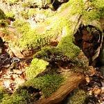 Geopfad (2): Bizarre Entdeckungen im kahlen Unterholz