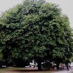 """Für """"Strunde hoch 4″ sollen 59 Bäume  fallen"""