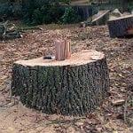Der Baumschutz ist und bleibt ein Trauerspiel