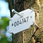 Baumfällungen in und um Herrlisch Raubach