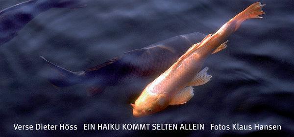 Haiku Titel Fisch
