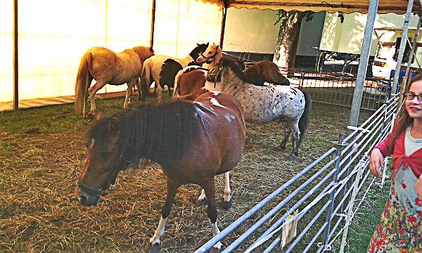 Die Ponys in ihrem Zelt im Forumpark