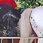 Ponykarussell wieder auf der Pfingstkirmes