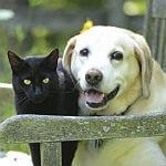 Stelldichein der Tierfreunde im Alten Freibad