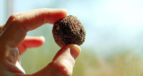 Eine Samenbombe nach dem Vorbild von