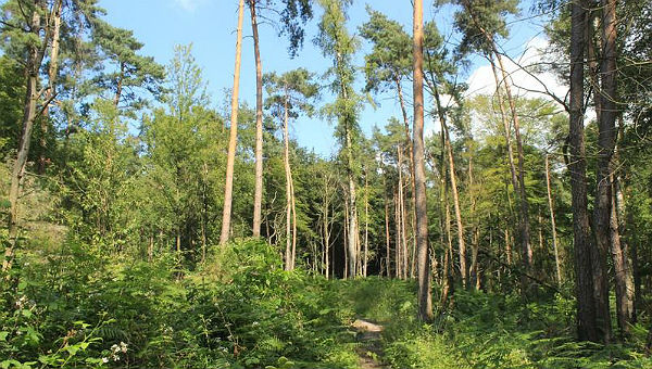 Lerbacher Wald