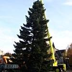 Wie der Weihnachtsbaum gerichtet wird