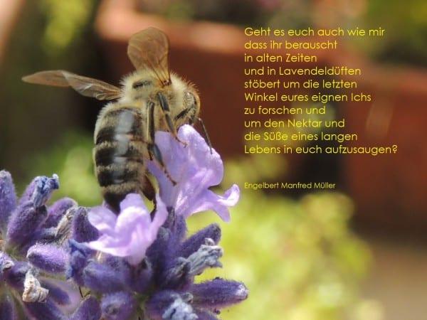 2d Gedicht Biene oder Wespe