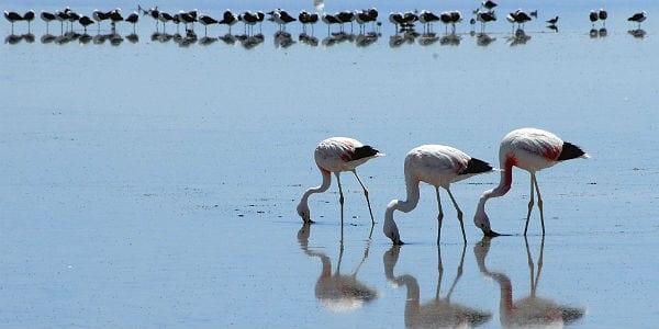 HAIKU 3 Rückseite Flamingos Salar de Atacama 600