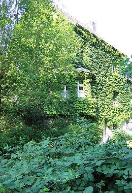Begrüntes Haus in Frankenforst