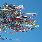 Maibaum kaufen, in den Mai tanzen, den 1. Mai feiern
