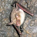 Auf den Spuren von Batman – am Bensberger See