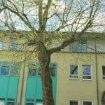 Für die Wiedereinführung der Baumschutzsatzung