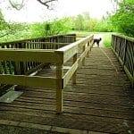 Die Brücken am Mutzbach in Paffrath