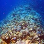 Vorstoß in die unbekannte Tiefsee