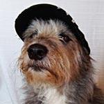 Hund auf Kontrollgang am Mutzbach