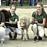 Tag der Pferdezucht – das Highlight für Pferdenarren