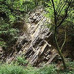 Pütz-Roth erlaubt Mensch und Tier in einem Grab