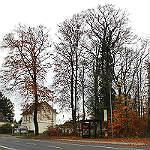 Stadt fällt kranke Buchen im Neuborner Busch