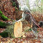 Hund sucht Burglind und Friederike