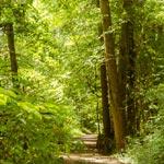 Kompromiss für Wanderer im Naturschutzgebiet