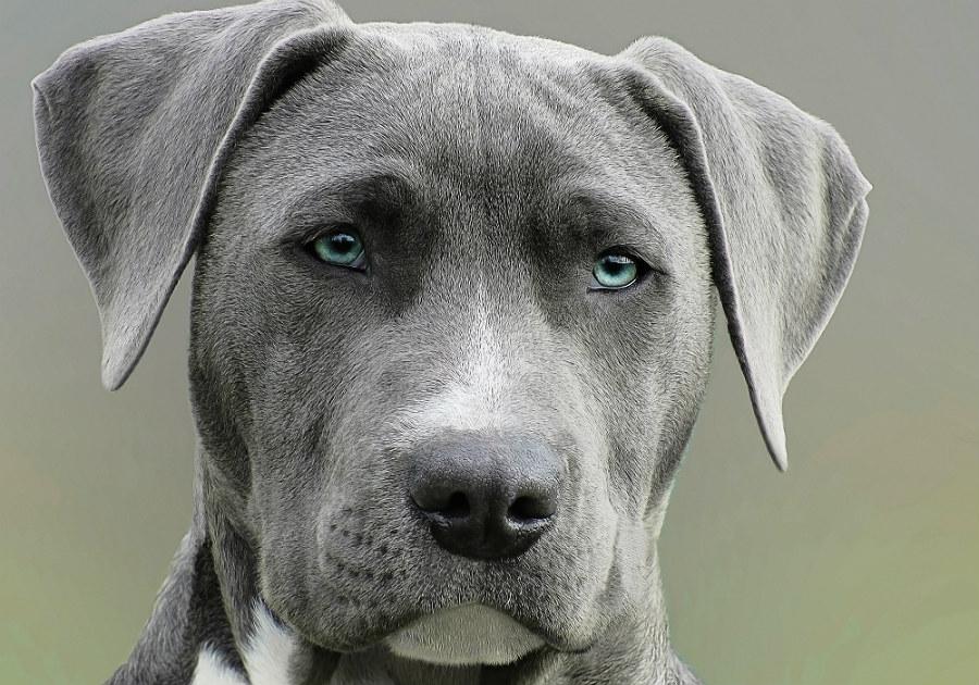 Hunde bilder