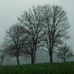 Nebel ist auch schönes Wetter
