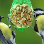Öko-Tipp im Juni: Vögel auch im Sommer füttern