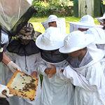 Bei Markus Bollen kommen Schüler den Bienen ganz nah
