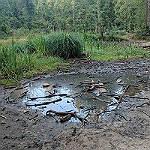 Rettet den Hasselbachteich im Gierather Wald!