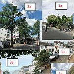 Warum auf der Schlossstraße 34 Bäume gefällt werden
