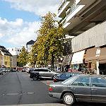 Stadt lädt zum Baum-Rundgang auf der Schlossstraße ein