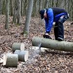 Im Begräbniswald müssen Bäume gefällt werden