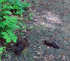 Hundehaufen im Begräbniswald sollten tabu sein