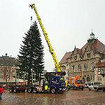 Rösrather Tanne schmückt den Weihnachtsmarkt