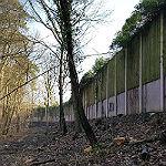 Landesbetrieb verteidigt Baumfällungen im Frankenforst